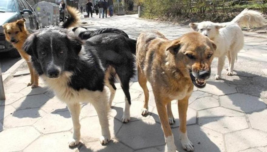 Охриѓанец каснат од куче во Скопје